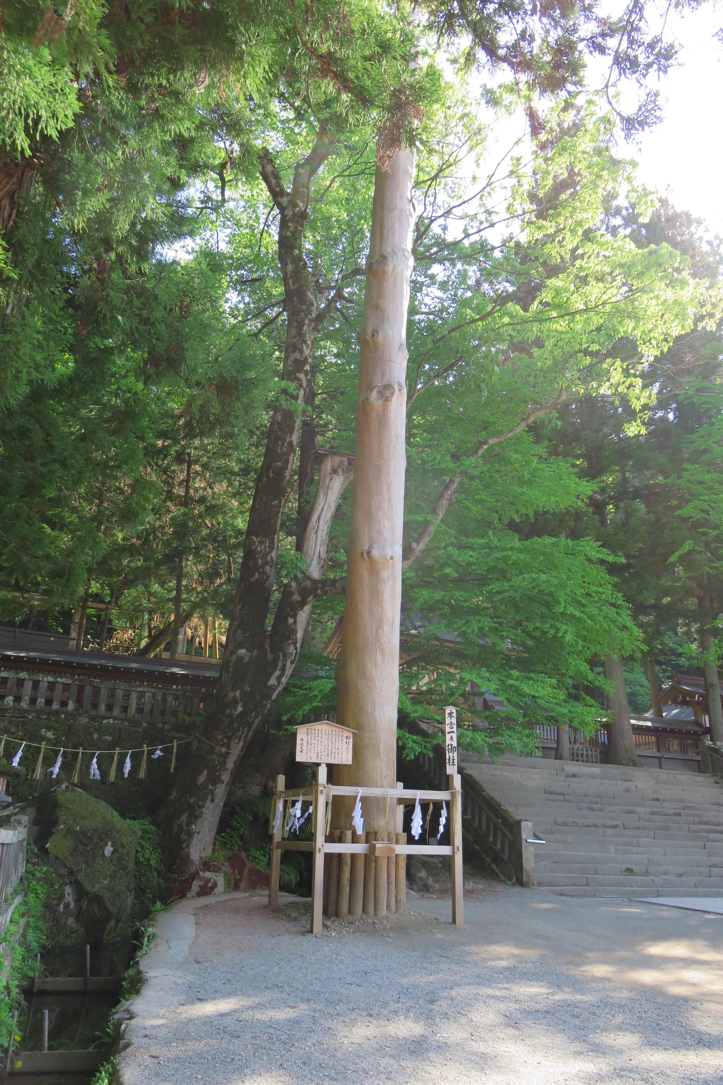 諏訪神社 本宮一之御柱